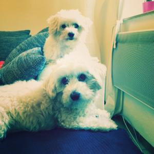 instagram-mayfair-filter-dogs